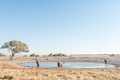 Three African elephants at a waterhole in Northern Namibia - PhotoDune Item for Sale