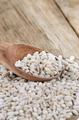 Barley grains - PhotoDune Item for Sale