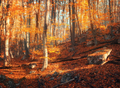 Colorful autumn landscape with trees and orange leaves. Mountain