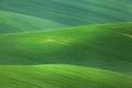 Minimalistic landscape with green fields, rolling hills at sunri