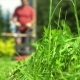 Male Gardener Approaching with Lawnmower - VideoHive Item for Sale