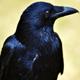 Crow - AudioJungle Item for Sale