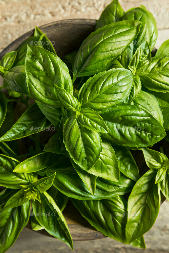 Raw Green Organic Basil Leaves