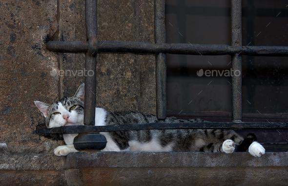 Cat Nap, Nepi Italy - Stock Photo - Images