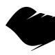 Theeblackbird