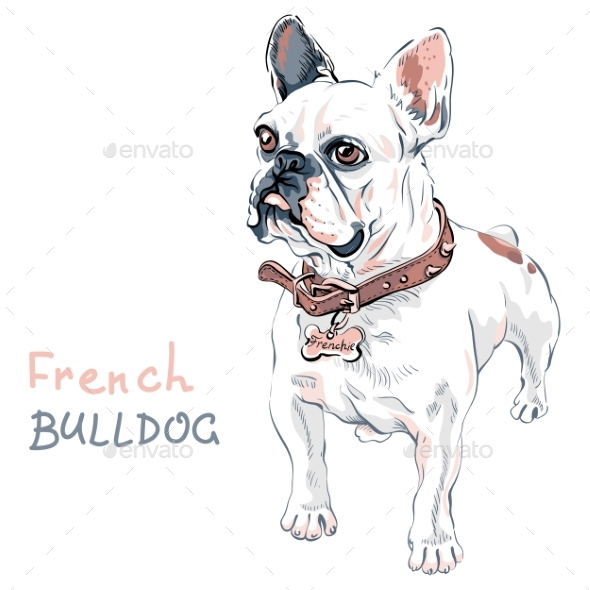 GraphicRiver Vector Sketch Domestic Dog French Bulldog Breed 20502438