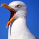 Seagulls - AudioJungle Item for Sale