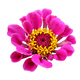 Flowers with clipping path - PhotoDune Item for Sale
