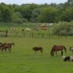 Horses on Summer Pasture - VideoHive Item for Sale