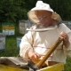 The Beekeeper Works with a Bee Colony - VideoHive Item for Sale