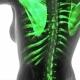 Human Body with Visible Skeletal Bones