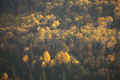 Hillside with Shadowy Trees in Autumn Color