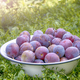 plums in bowl - PhotoDune Item for Sale