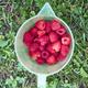 ripe strawberries - PhotoDune Item for Sale