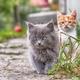 cat close up - PhotoDune Item for Sale