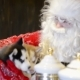 Santa Claus Stroking Little Husky Puppies - VideoHive Item for Sale