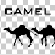 Camel Silhouettes - VideoHive Item for Sale