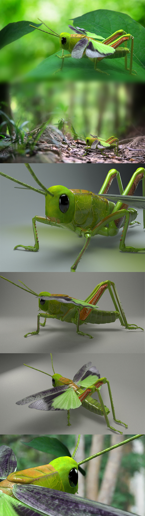 Grasshopper - sauterelle - 3DOcean Item for Sale
