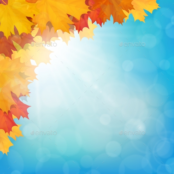 Realistic Maple Leaves Corner Sun Sky - Backgrounds Decorative