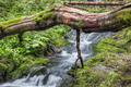 Fallen tree trunk over stream - PhotoDune Item for Sale