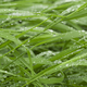 Green grass with water drops. - PhotoDune Item for Sale