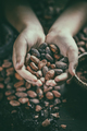 Aromatic cocoa beans - PhotoDune Item for Sale