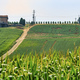Oltrepo Piacentino (Italy), rural landscape at summer - PhotoDune Item for Sale