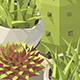 Vector isometric low poly houseplants