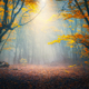 Enchanted autumn forest in fog in the morning. Old Tree - PhotoDune Item for Sale