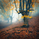 Foggy forest. Mystical autumn forest in fog in the morning - PhotoDune Item for Sale