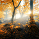 Magical old forest with sun rays in the morning - PhotoDune Item for Sale