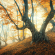 Amazing forest in fog. Colorful landscape with foggy forest - PhotoDune Item for Sale