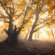 Magical old tree with sun rays in the morning - PhotoDune Item for Sale