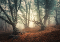 Mystical autumn forest in fog. Magical old trees - PhotoDune Item for Sale