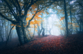Dark fog forest. Mystical autumn forest with trail in blue fog - PhotoDune Item for Sale
