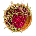 Red beetroot sprouts in wooden bowl over white