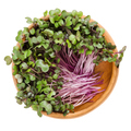 Red cabbage sprouts in wooden bowl over white