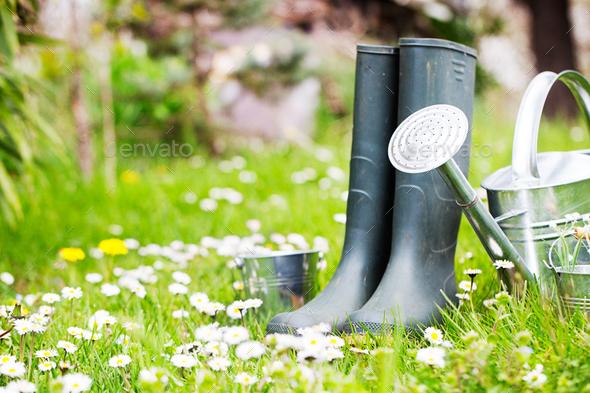 Garden - Stock Photo - Images