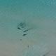 Beautiful Girl in Red Bikini in the Sea - VideoHive Item for Sale