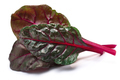 Chard (silverbeet, mangold) leaves, paths - PhotoDune Item for Sale