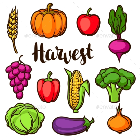 Harvest Set of Fruits and Vegetables - Food Objects