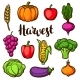 Harvest Set of Fruits and Vegetables - GraphicRiver Item for Sale