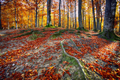 Autumn forest in the mountains - PhotoDune Item for Sale