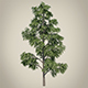 Vray Ready Tree - 3DOcean Item for Sale