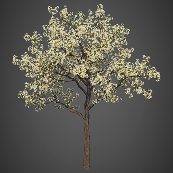 Vray Ready Flower Tree - 3DOcean Item for Sale