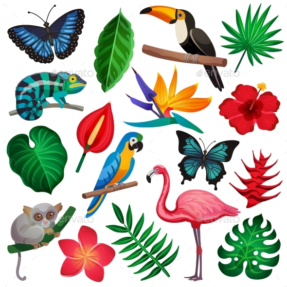Tropical Exotic Icon Set - Nature Conceptual