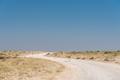 Herd of springboks walking down a road in Northern Namibia