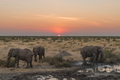 Three African elephants in the twilight at sunset