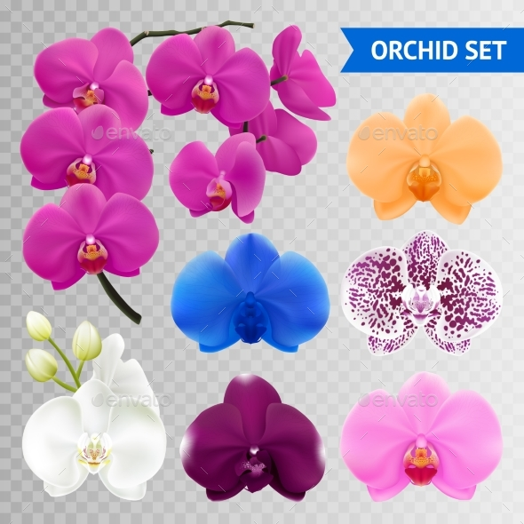 Orchid Flowers Realistic Transparent Collection - Flowers & Plants Nature