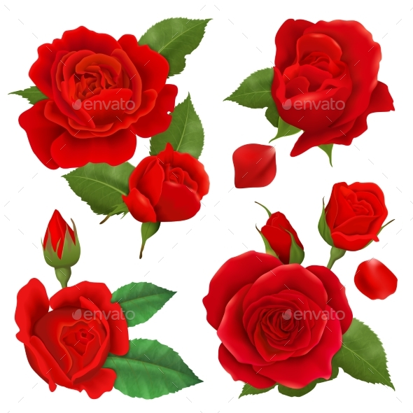 Realistic Rose Flower Icon Set - Flowers & Plants Nature